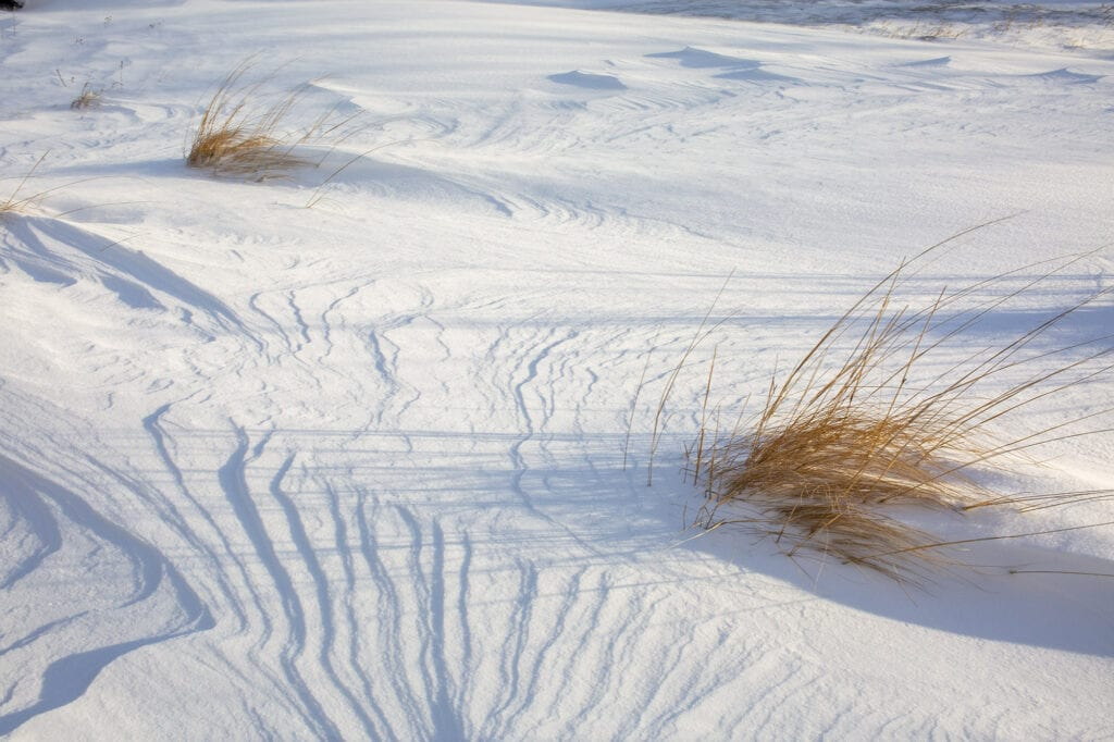 Snow with beach grass OBX
